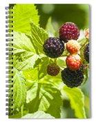 Black Raspberries 2 Spiral Notebook