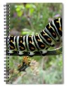 Black Swallowtail Caterpillar Spiral Notebook