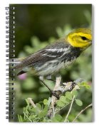 Black-throated Green Warbler Spiral Notebook