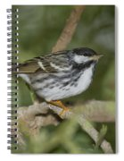 Blackpoll Warbler Spiral Notebook