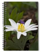 Bloodroot Wildflower - Sanguinaria Canadensis Spiral Notebook