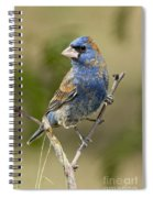 Blue Grosbeak Spiral Notebook