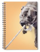 Blue Staffie Having A Tug Of War Spiral Notebook