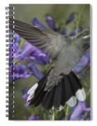 Blue-throated Hummingbird Spiral Notebook