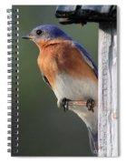 Bluebird Spiral Notebook