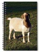 Boer Goat  Spiral Notebook