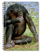 Bonobo Spiral Notebook