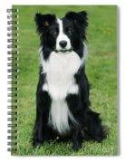 Border Collie Dog Spiral Notebook