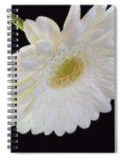 Bright White Gerber Daisy # 2 Spiral Notebook