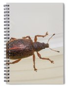 Broad-nosed Weevil - Polydrusus Mollis Spiral Notebook
