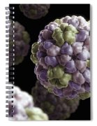 Brome Mosaic Virus Spiral Notebook