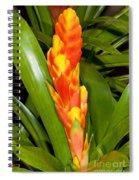 Bromeliad Flower Spiral Notebook