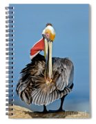 Brown Pelican Preening Spiral Notebook