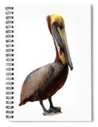 Brown Pelican-7 Spiral Notebook