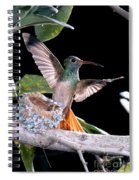 Buff-bellied Hummingbird At Nest Spiral Notebook