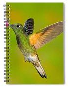 Buff-tailed Coronet Hummingbird Spiral Notebook