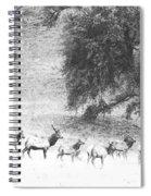 Bull Elk With Harem Spiral Notebook