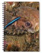 Burrfish And Cleaner Goby Spiral Notebook