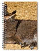 Burro Foal Spiral Notebook