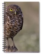 Burrowing Owl Photo Spiral Notebook