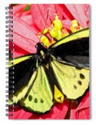 Cairns Birdwing Butterfly Spiral Notebook