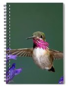 Calliope Hummingbird Stellula Calliope Spiral Notebook