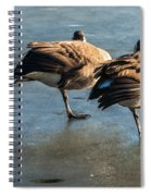 Canada Geese At Rest Spiral Notebook