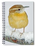 Carolina Wren In Winter Spiral Notebook