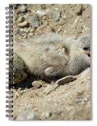 Caspian Tern Spiral Notebook