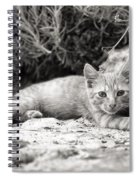 Cat And Lavender  Spiral Notebook