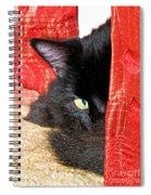 Cat Hiding Behind Drapes Spiral Notebook