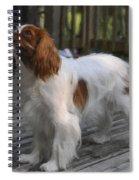 Cavalier Spiral Notebook