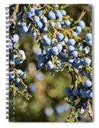 Cedar Blue Spiral Notebook