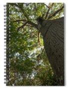 Ceiba Tree Spiral Notebook