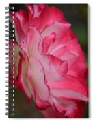 Cherry Cream Rose Spiral Notebook