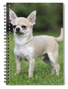 Chihuahua Dog Spiral Notebook