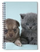 Chihuahua Puppy And British Shorthair Spiral Notebook