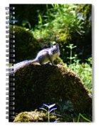 Chipmunk In The Sun Spiral Notebook