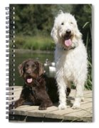 Chocolate And Cream Labradoodles Spiral Notebook