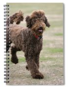 Chocolate Labradoodle Running In Field Spiral Notebook