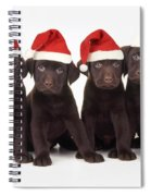 Chocolate Labrador Puppies Spiral Notebook