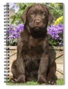 Chocolate Labrador Puppy Spiral Notebook