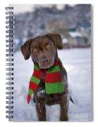 Chocolate Labrador Retriever Spiral Notebook