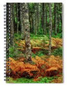 Cinnamon Ferns And Red Spruce Trees Spiral Notebook