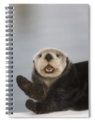 Close Up A Sea Otter In Prince William Spiral Notebook