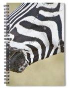 Close-up Of A Burchells Zebra Equus Spiral Notebook