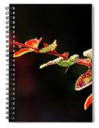 Close Up Of Berberis  Quebec, Canada Spiral Notebook