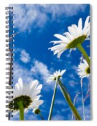 Close-up Shot Of White Daisy Flowers From Below Spiral Notebook
