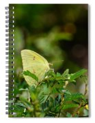 Clouded Sulphur Butterfly Spiral Notebook
