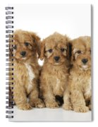 Cockapoo Puppy Dogs Spiral Notebook
